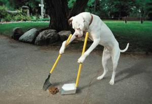 dog-obedience-school